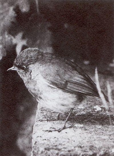 bromoil lacock abbey bird